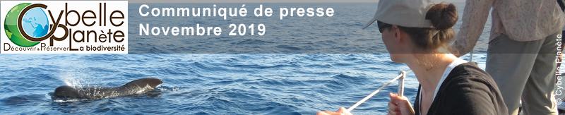BANDEAU CP Expedition cetaces 2020