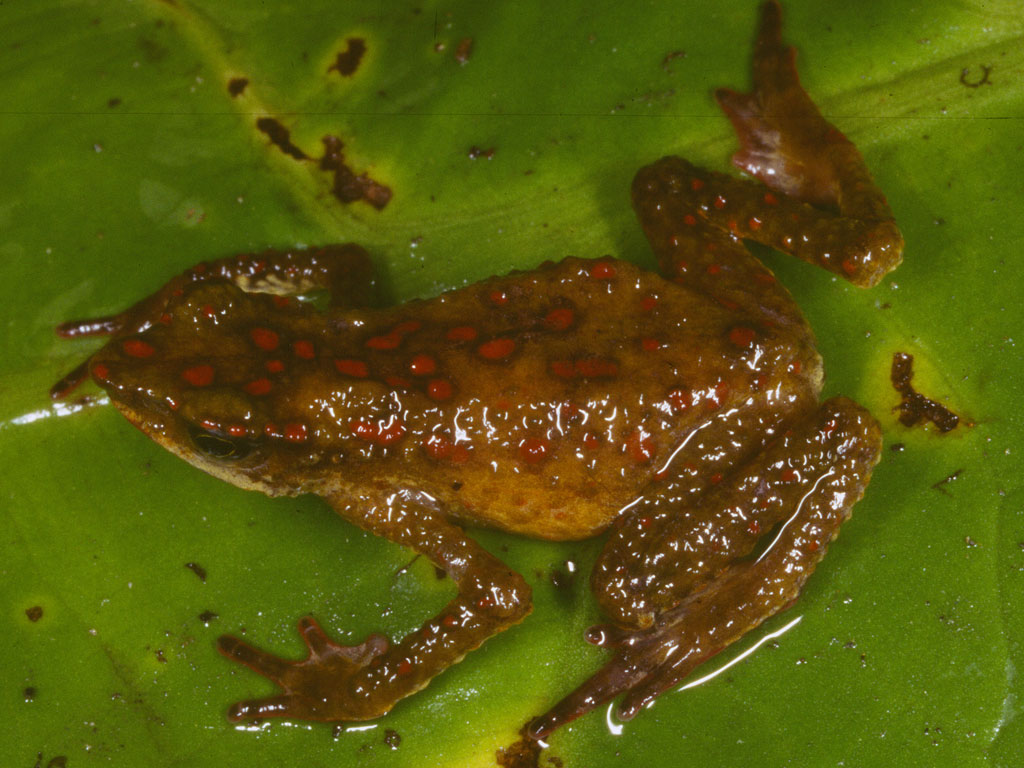 23 Critically Endangered Amphibian Species in Peru