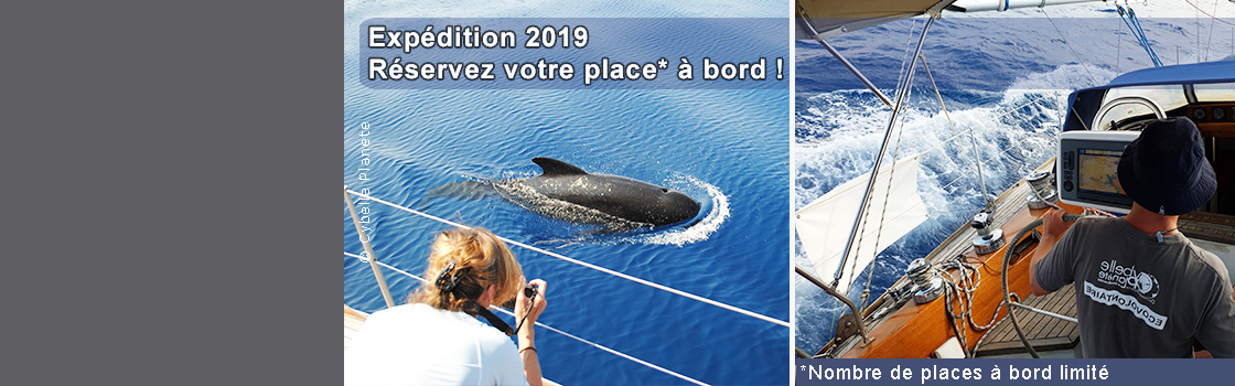 Cetacean Expeditions 2019