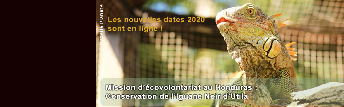 Iguana Mission - 2020 Dates Online!