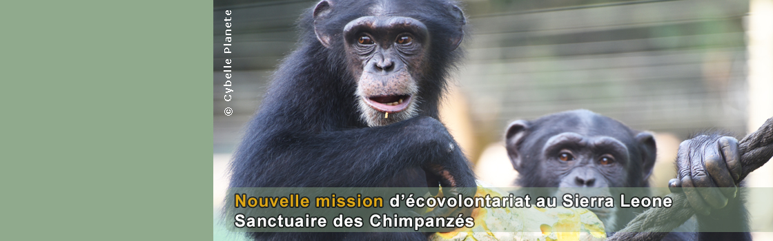 New project dedicated to Chimpanzees