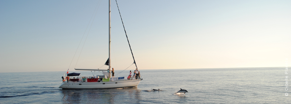 Launch of Cetaceans mission for summer 2017