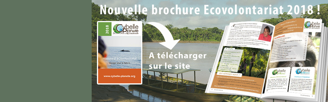 Nouvelle Brochure Ecovolontariat