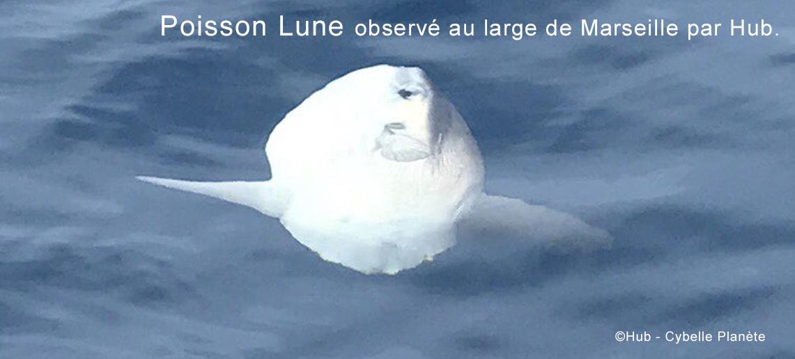NL 48 MoonfishHub