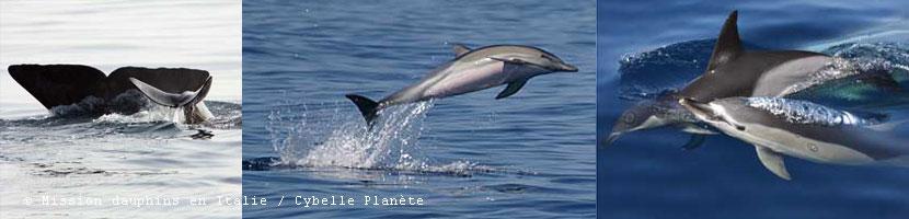 italie dauphin resume