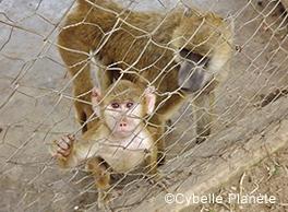 2020 animal law enclosure Cybelle Plante