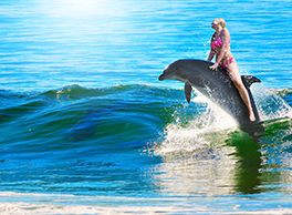 2020 animal rights swimming dolphin Cybelle Planete