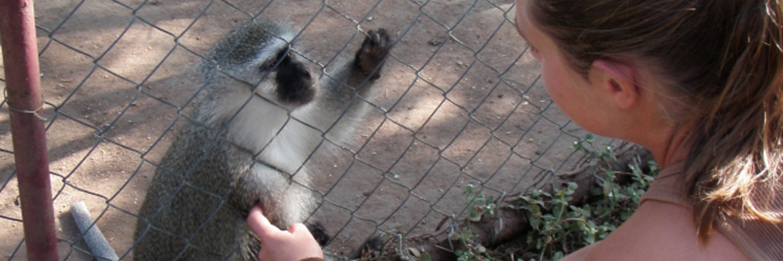 2020 animal rights monkey ecovolunteer refuge mission cybelle planete