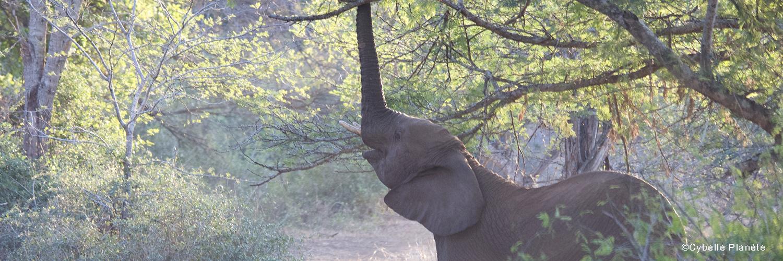 2021 04 wildlife south africa