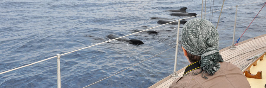 Cetacean Mission in France, Copyright Chopier Noella