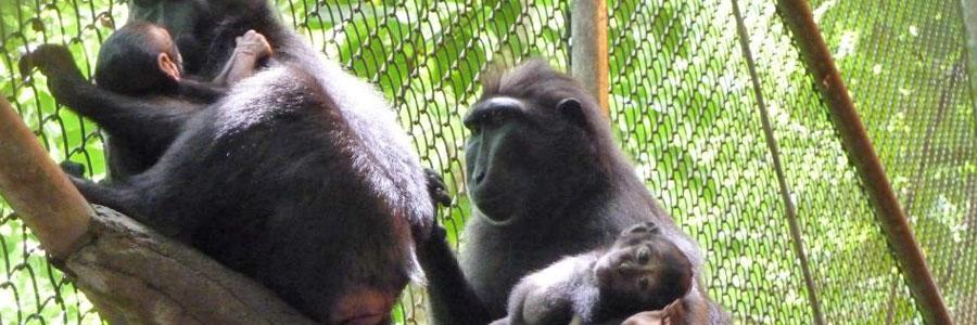 Mission Wildlife Indonesia Copyright Cybelle Planète