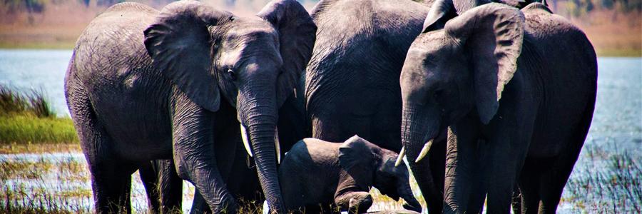 malawi wild fauna7