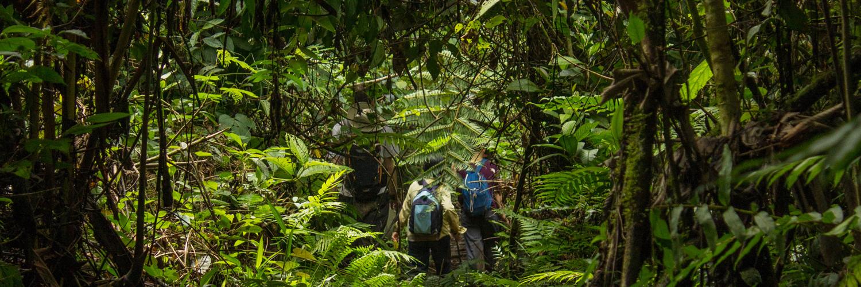 Amazonian volunteering