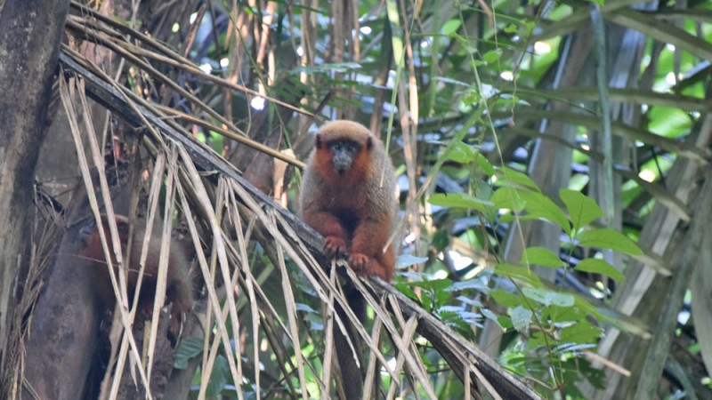 Wildlife of the Tambopata Reserve in Peru