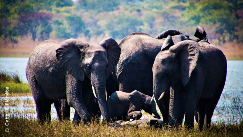 Wildlife in Malawi