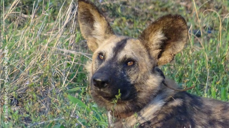 Monitoring wildlife Wild in South Africa