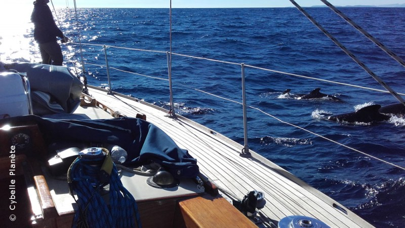 Ecovolunteer and pilot whales