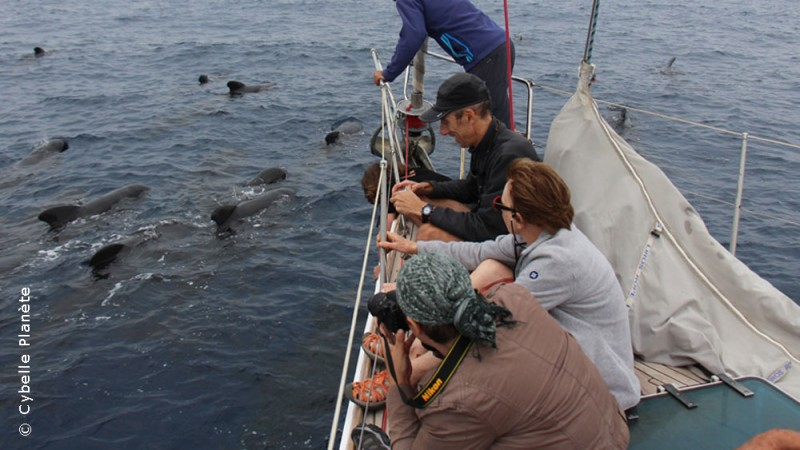 Ecovolunteers observing a group of pilot whales