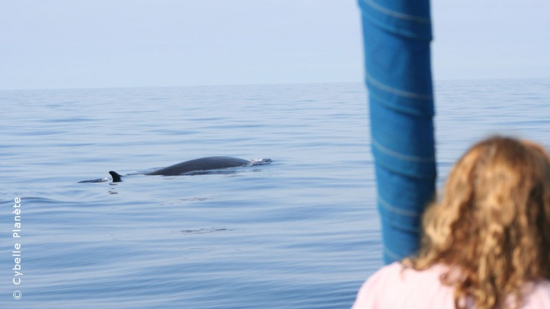 Ecovolunteer observing a whale Common