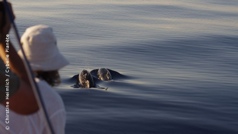 Ecovolunteers observing dolphins in