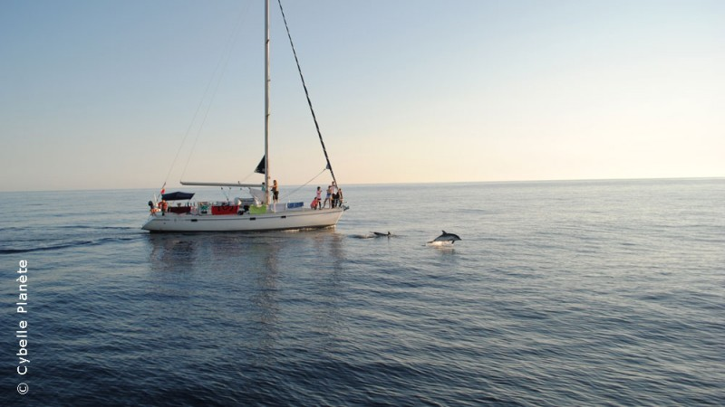 Shipping cetaceans in the Pelagos Sanctuary, France