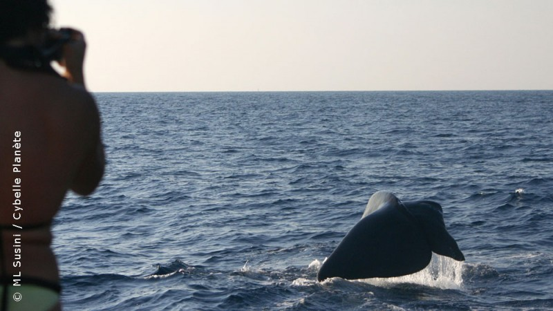 Ecovolunteer observing a sperm whale