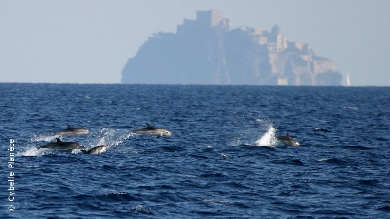 cetaceans mission to Italy