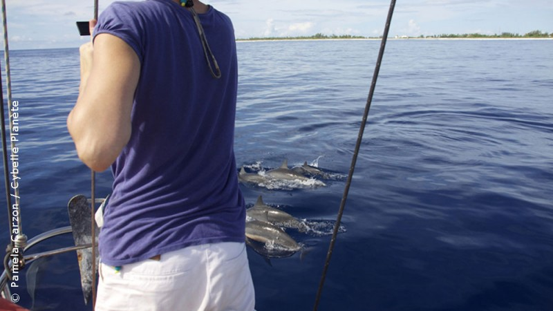 Eco-volunteering for the monitoring of cetaceans in French Polynesia