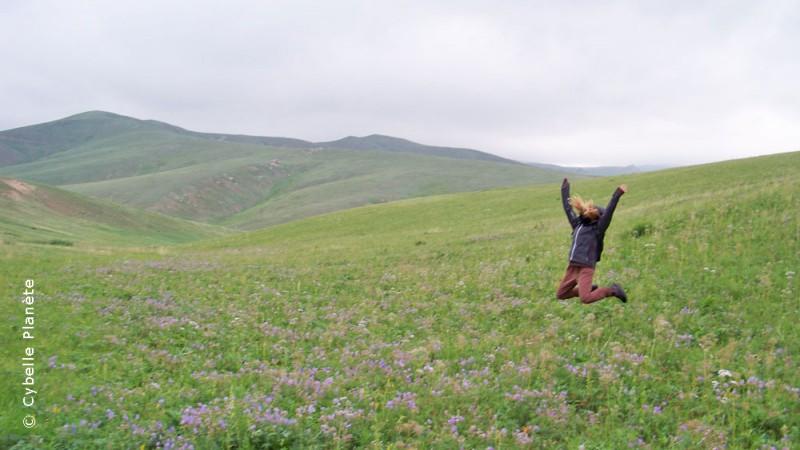 reintroduction program of Przewalski horses, Mongolia