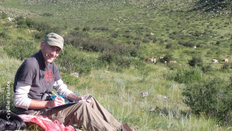 Przewalski horses reintroduction program in Mongolia