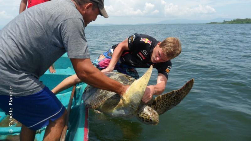 Conservation of hawksbill turtles in El Salvador
