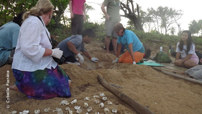Turtle conservation in Thailand