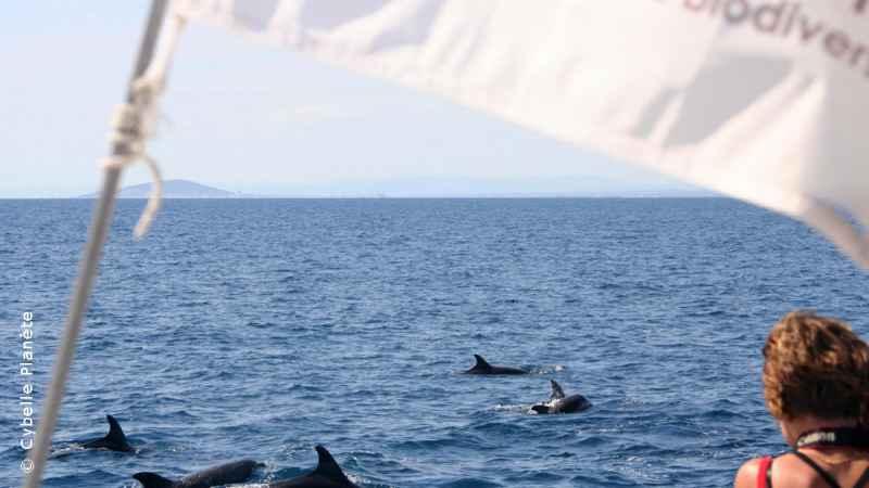 Pelagos Cetacean, France