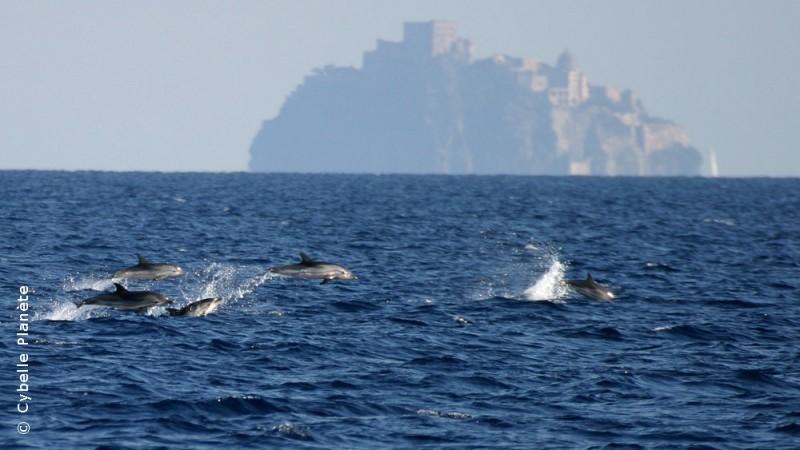 Cetaceans, Italy