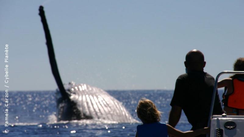 Cetaceans, French Polynesia