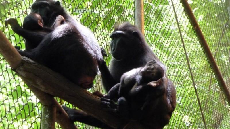 Wild Animal Sanctuary, Indonesia