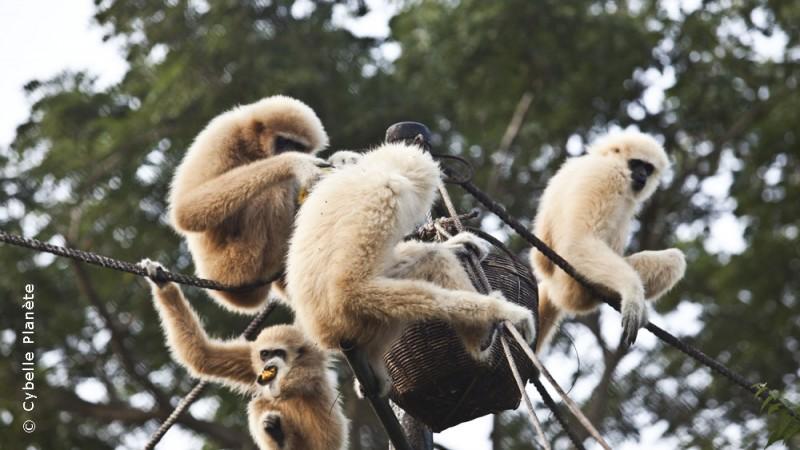Wild Animal Sanctuary, Thailand
