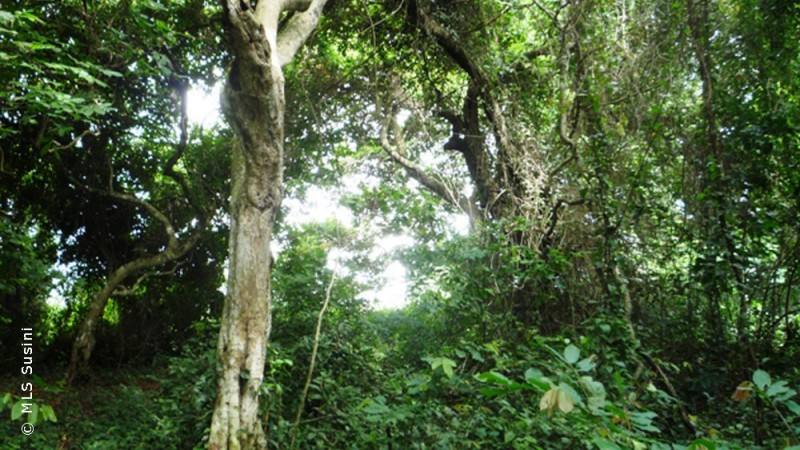 sacred forests, South Benin