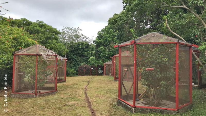 The Iguana Conservation Center