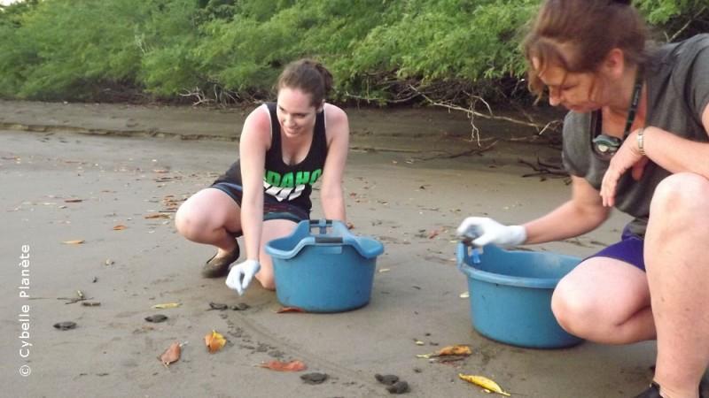 sea turtles, Nicaragua