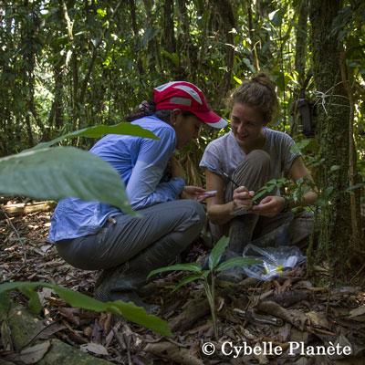 Amazonian Forest Mission Peru