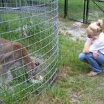 USA Feline Sanctuary Mission
