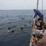Mission Cetaceans Cybelle Planet
