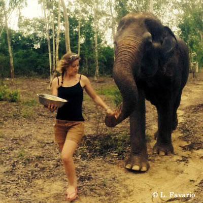 Elephant Refuge Mission Thailand