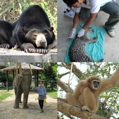 Mission Wildlife Thailand