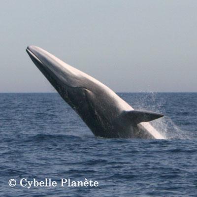 Cetacean whale mission