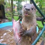 Mission Otter Brazil Cybelle Planet